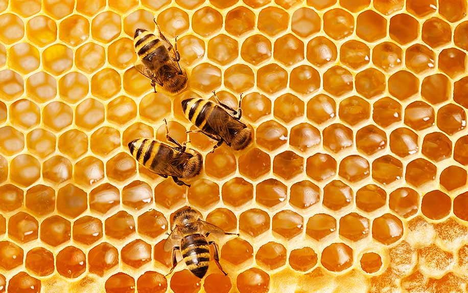 How Hemp Could Save Honeybees